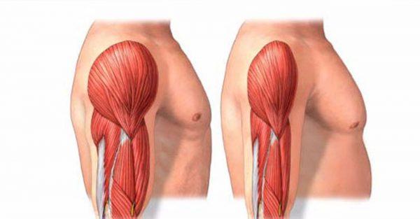 جلوگیری از تحلیل رفتن عضلات و بازسازی عضلات تحلیل رفته