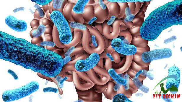 باکتری های مفید توسط فیبر غذایی تغذیه میشوند